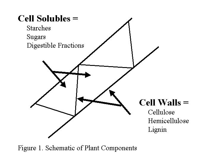 Cell Solubles